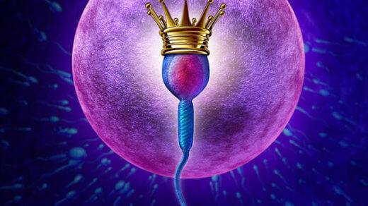 Программа ЭКО поэтапно. Эмбриологический этап.