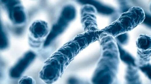 Преимплантационное генетическое тестирование